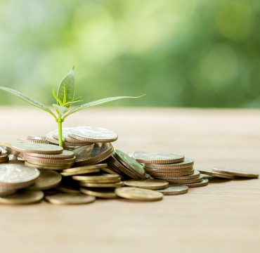 Planting trees on a coin pile with sunlight to save money, saving and investment ideas or future financial planning, ideas for business, innovation, growth and money.